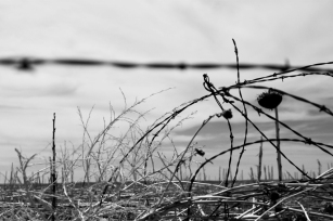 SUNFLOWERS AND BARBED WIRE, Pine Ridge Indian Reservation, South Dakota copia