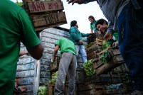 UTT - distribuzione verdura
